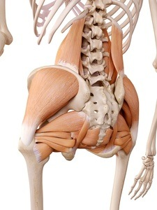 Hip external rotators