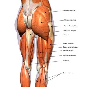 Hip Internal rotators